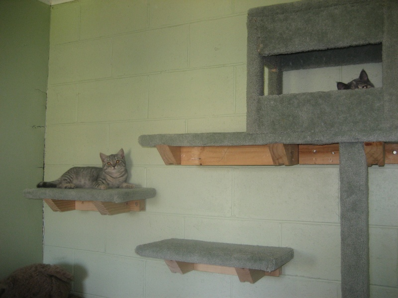 The new wall of cat steps with Gemma in the house & silver on a step